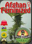 vacouver-afghan-feminized-seeds