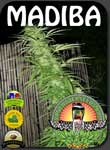 vancouver-africa-sativa-seeds