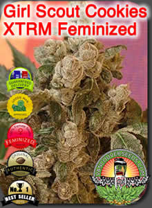 vancouver seeds feminized no1