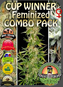 vancouver seeds feminized no3