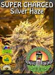 vancouver-silver-haze-high-cbd-seeds