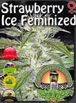 vancouver-strawberry-ice-fem